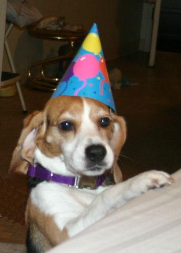 Cascade Beagle Rescue Birthday Tributes