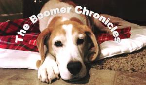 BoomerChronicles