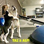 Alfi & Tax -September